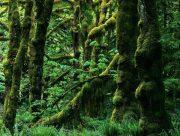 یکپنجم از جنگلهای هیرکانی ثبت جهانی شدهاند