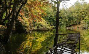 پاییز از دریچه دوربین