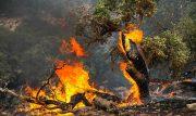 نامه سازمان جنگلها به دادستان کشور برای تشدید برخورد با عاملان حریقهای عمدی