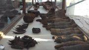 کشف اجساد مومیایی پرندگان و حیوانات در مقبره ۲۰۰۰ ساله مصری+عکس